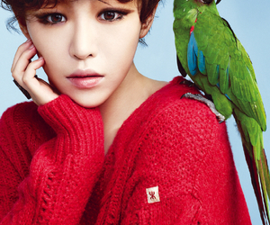gain, 가인, and brown eyed girls image