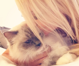 blonde, blonde hair, and fluffy cat image