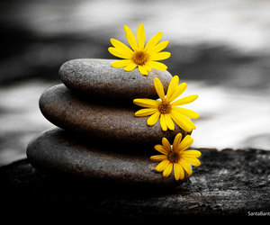 flowers, yellow, and stone image