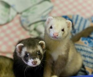 2009, ferret, and pentax k10d image