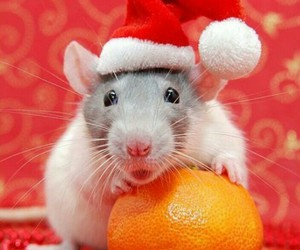 christmas and rat image
