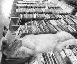 black and white, cat, and music image
