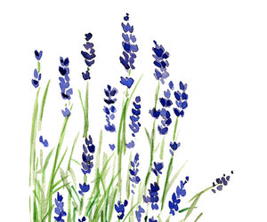 art, flowers, and lavender image