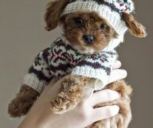puppy, dog, and winter image
