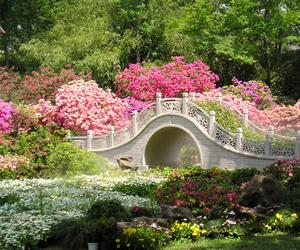 flowers, garden, and bridge image
