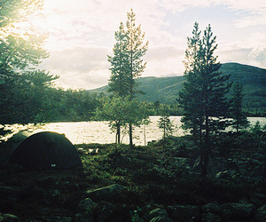 trees, forest, and lake image