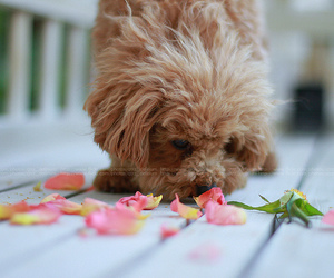 doggie, flower, and petals image