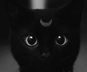 black and white, love, and cat image