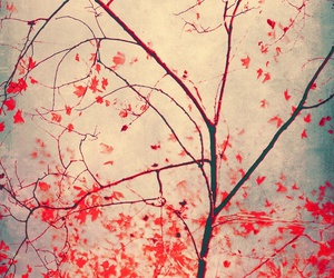 autumn and red image