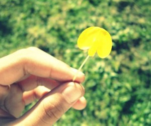 flower, vintage, and yellow image