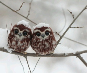 nature, owls, and snow image