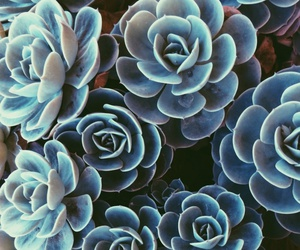 plants and succulent image