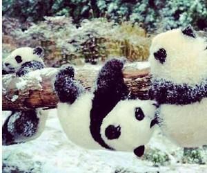 panda, cute, and snow image
