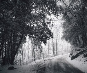 snow, cold, and forest image
