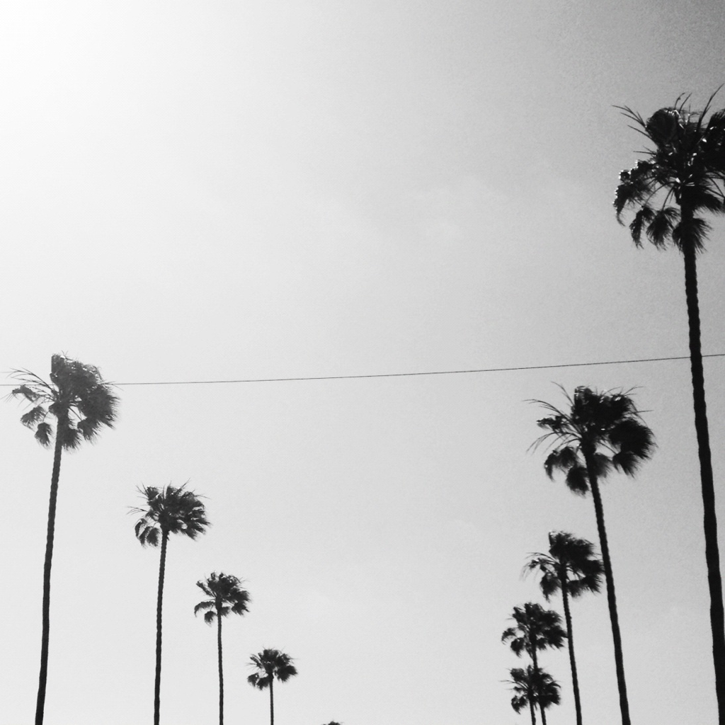 black and white, palm trees, and summer image