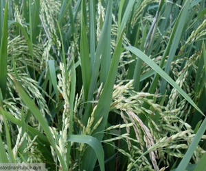 bali, culture, and farming image