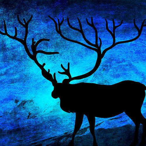 animal, blue, and grunge image