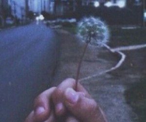 couples, dandelion, and grunge image