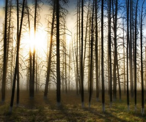 forest, trees, and woods image