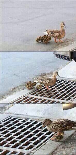 duck, funny, and sad image