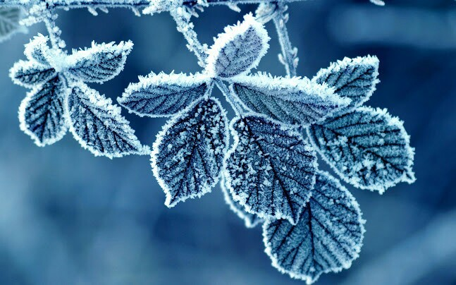 winter, snow, and leaves image
