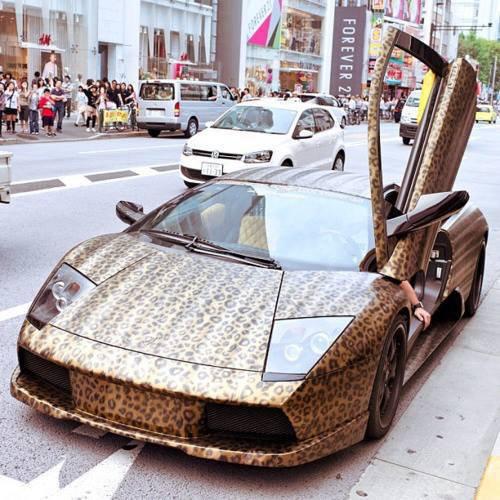 car, leopard, and Lamborghini image