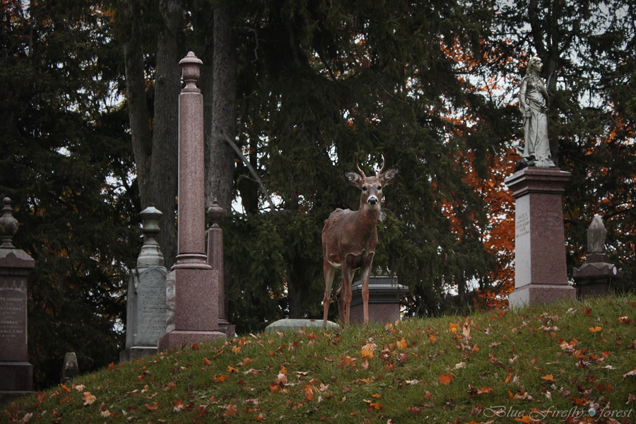 deer, animal, and cemetery image
