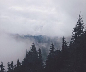 grunge, forest, and nature image