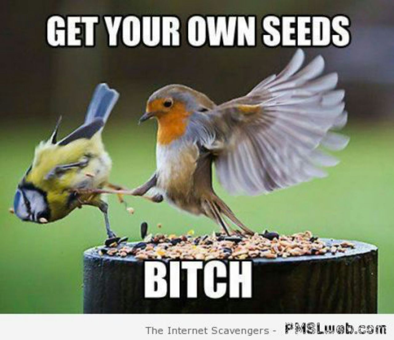 bird, funny, and seeds image
