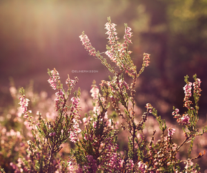 colors, pink, and photography image