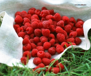 raspberry and fruit image