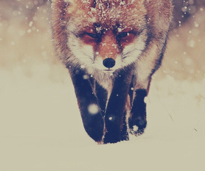 animal, winter, and cold image