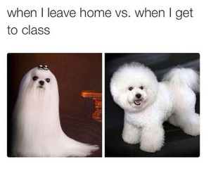 curly, true, and dogs image