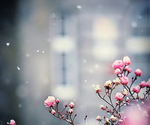 flowers, pink, and snow image