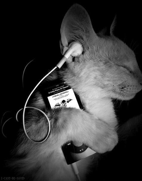 music, cat, and avenged sevenfold image