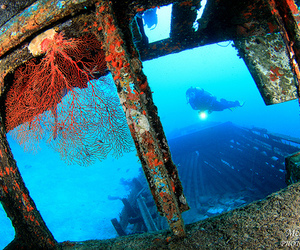 blue, sea, and underwater image