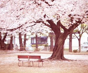 photography, pink, and tree image
