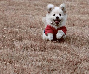 dogs, cute, and inspo image