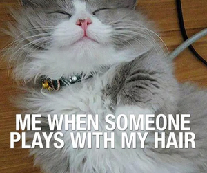 cat, cute, and hair image