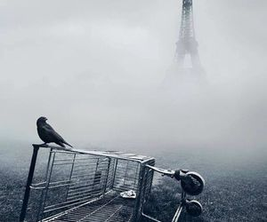 paris, bird, and fog image