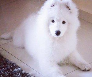 dog, animal, and mimimi image