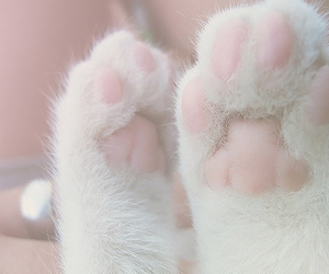 cat, cats, and footprints image