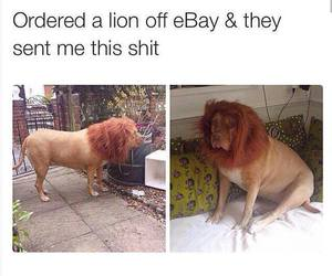funny, lion, and dog image