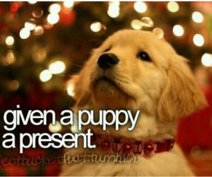 puppy, present, and bucket list image