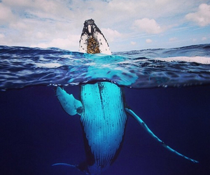 ocean, whale, and animal image
