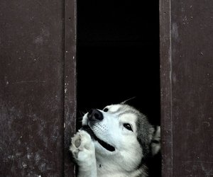 adorable, dog, and animals image
