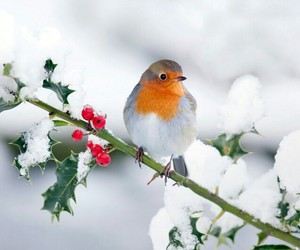bird, snow, and winter image