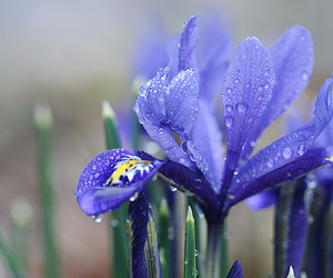 blue, flower, and drops image