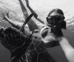 black and white, exotic, and swimming image