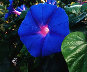 blue, colour, and flower image